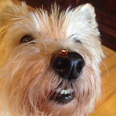 A dog's head with a ladybug on the nose to inspire creativity