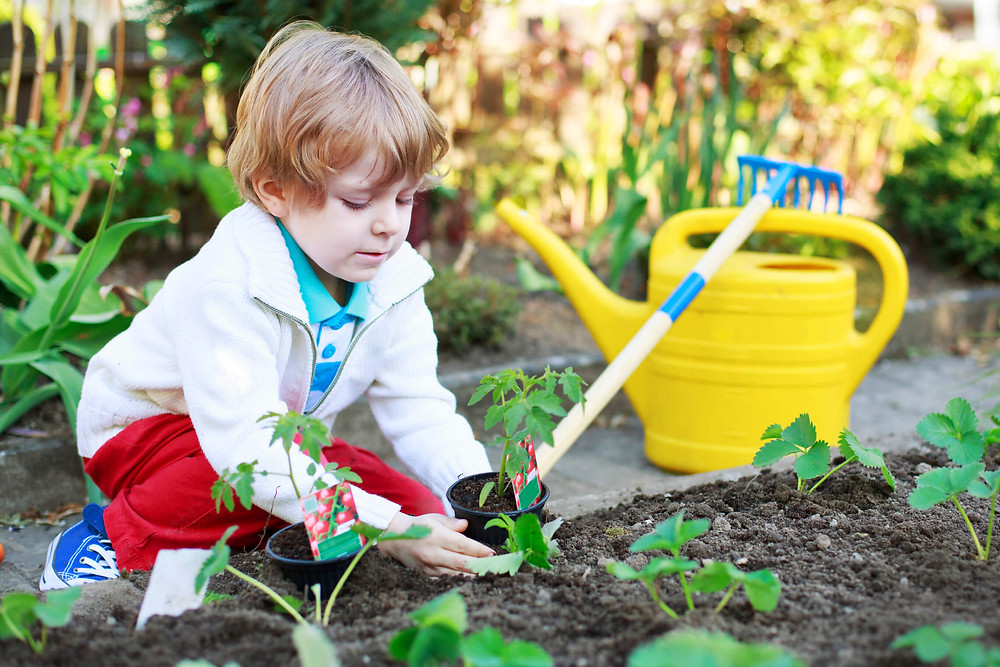 boy planting a garden with a rake and watering can
