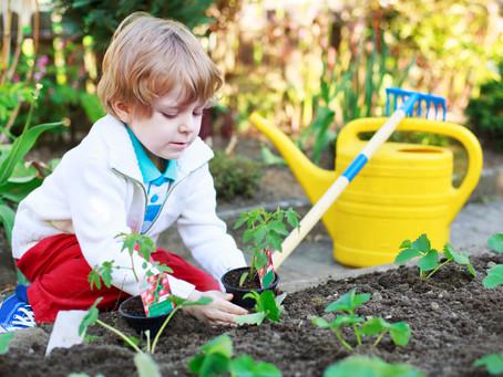 Plant an Abstract Garden