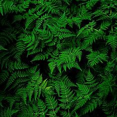 Green9.jpg