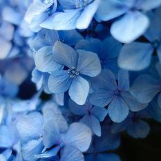 Blue14.jpg