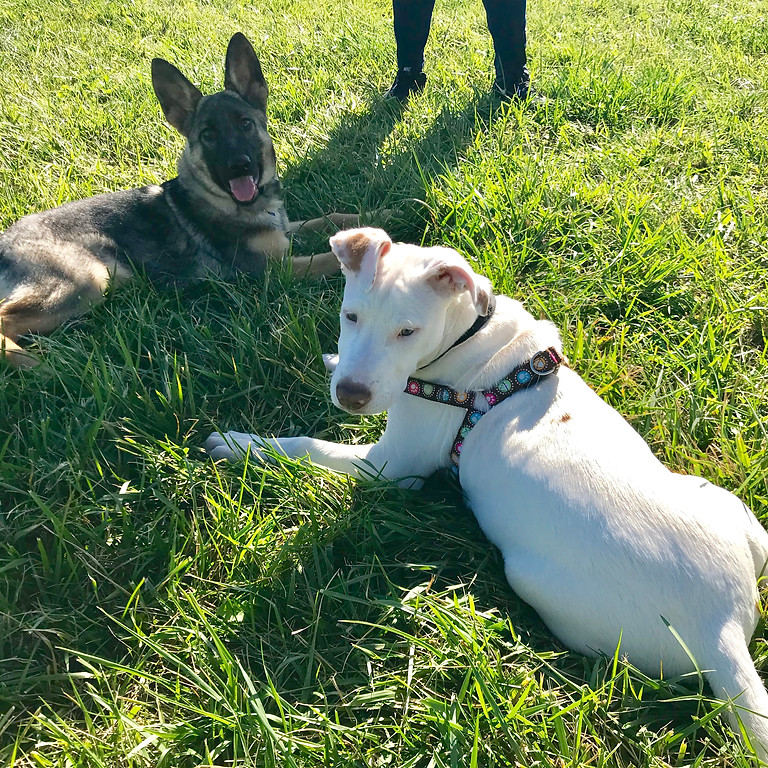 Free Decoding Dog Play Lecture