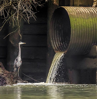 stormwater polution solutions.jpg