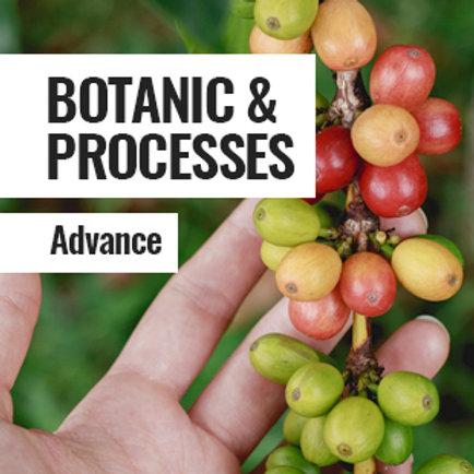 BOTANIC & PROCESSES - ADVANCE