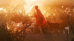 ©Philip_Lee_Harvey_Herder-Kenya.jpg