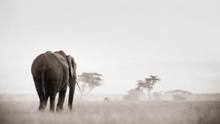 ©Philip_Lee_Harvey__Legends_Kenya.jpg