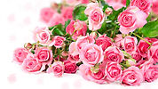 flower-pink-rose-1.jpg