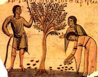 zeytin-ve-zeytinyaginin-tarihi.jpg