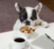 breakfast-bulldog-close-up-688961.jpg