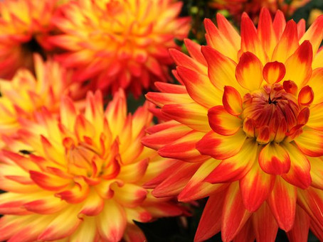 Autumnal Funeral Flowers