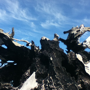 Driftwood Dinosaur Series