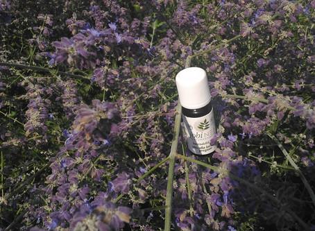 Lavendel, für Gesundheit und Kosmetik - II