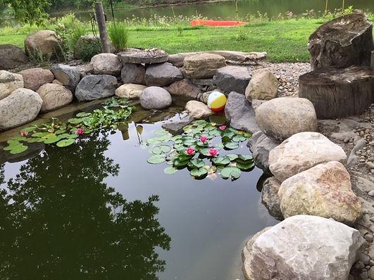water lilys.JPG