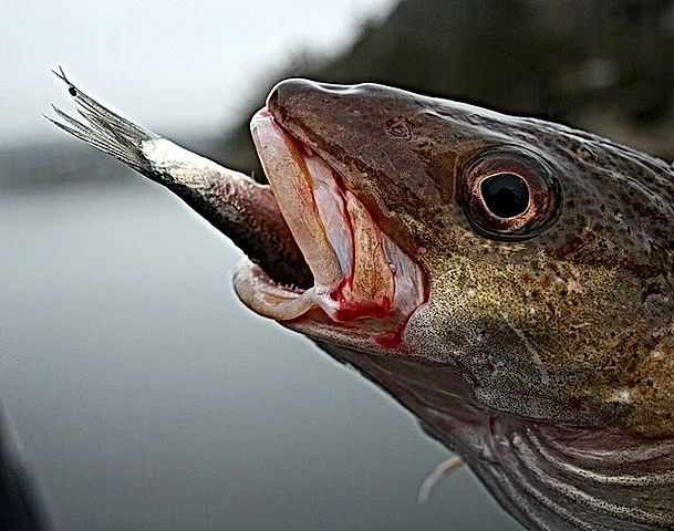 fiske 2_edited.jpg