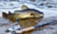 Cod coast fishing