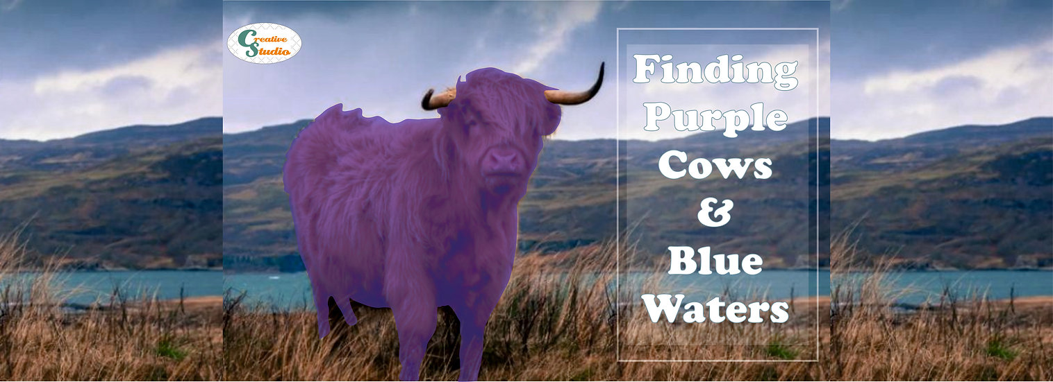 purple cow banner.jpg