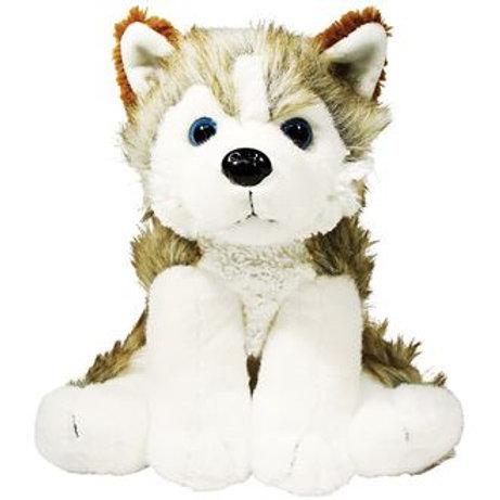 Hunter the husky dog