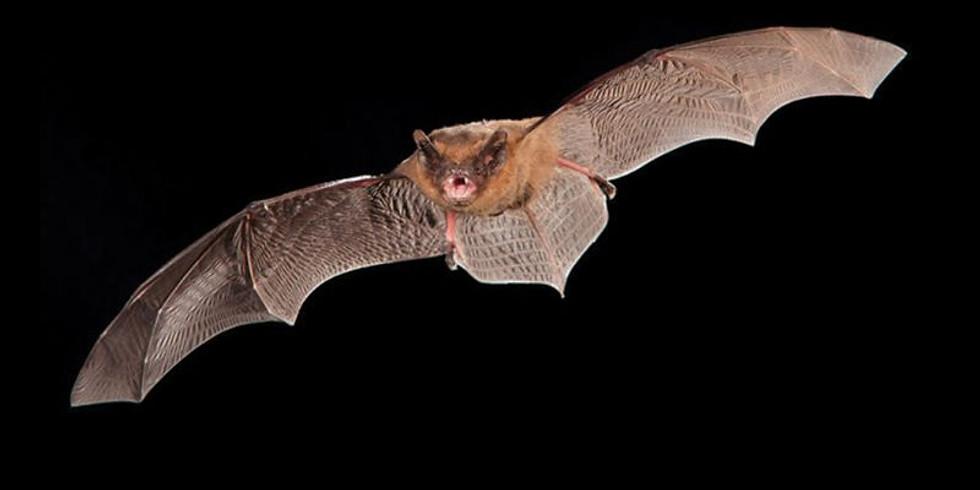 24. Bat Walk  in Dothill LNR  - Fully Booked