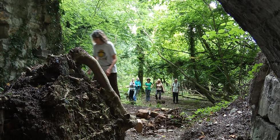 8. Limekiln Woods & The Wrekin.
