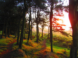 Springing round the Wrekin