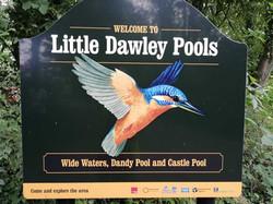 DawleyPools