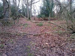 Limekiln Wood Jan 2018 before