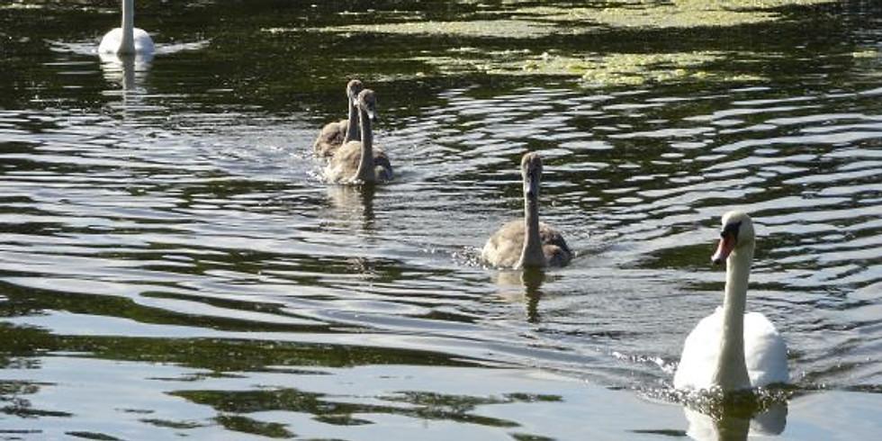 First Sunday in June- Wrekin Link, Admaston, Dothill