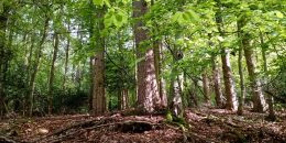 23. 10 Telford Trees