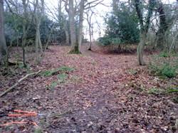 Limekiln Wood 2018 after