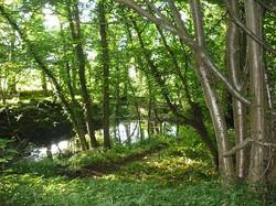 Limekiln Wood