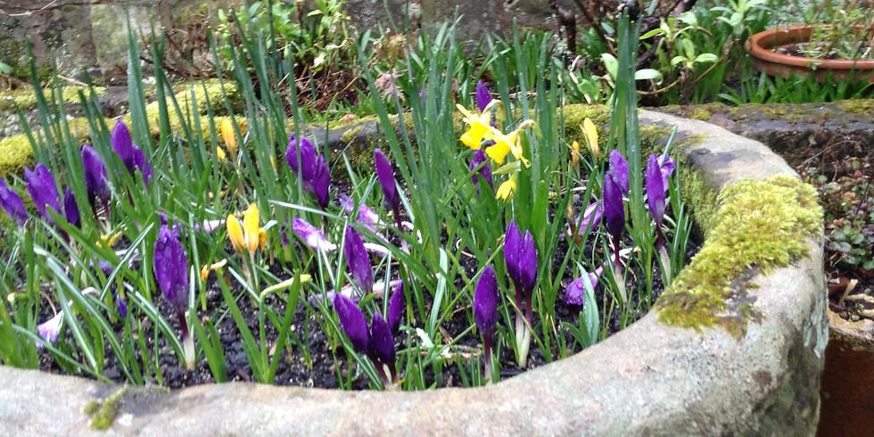 In search of Daffodils  - Regular 3rd Sunday Walk