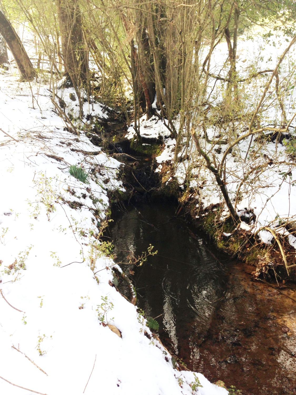 Spring-Fed Creeks