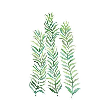 simple vines.jpg