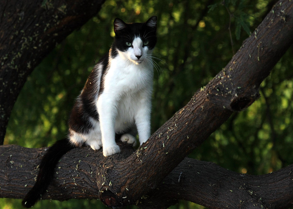 A cat sitting on a branch.