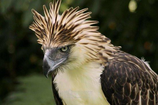 philippine-eagle-centre