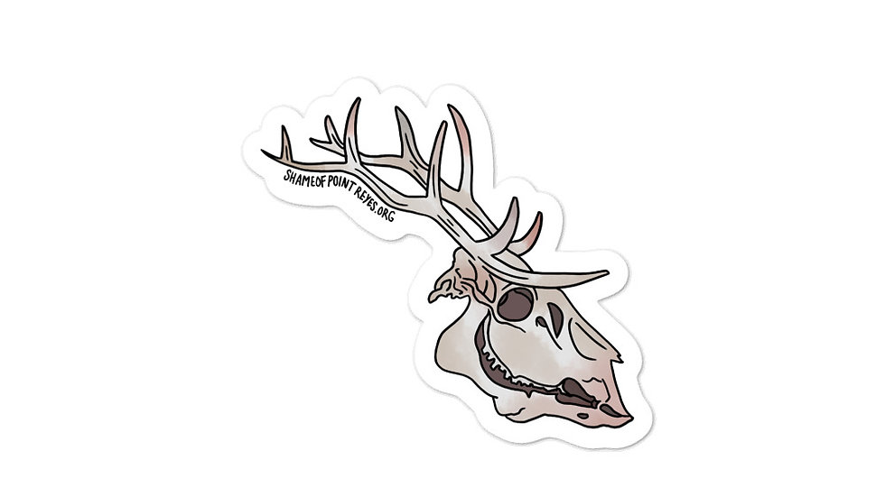 Tule Elk Skull Sticker