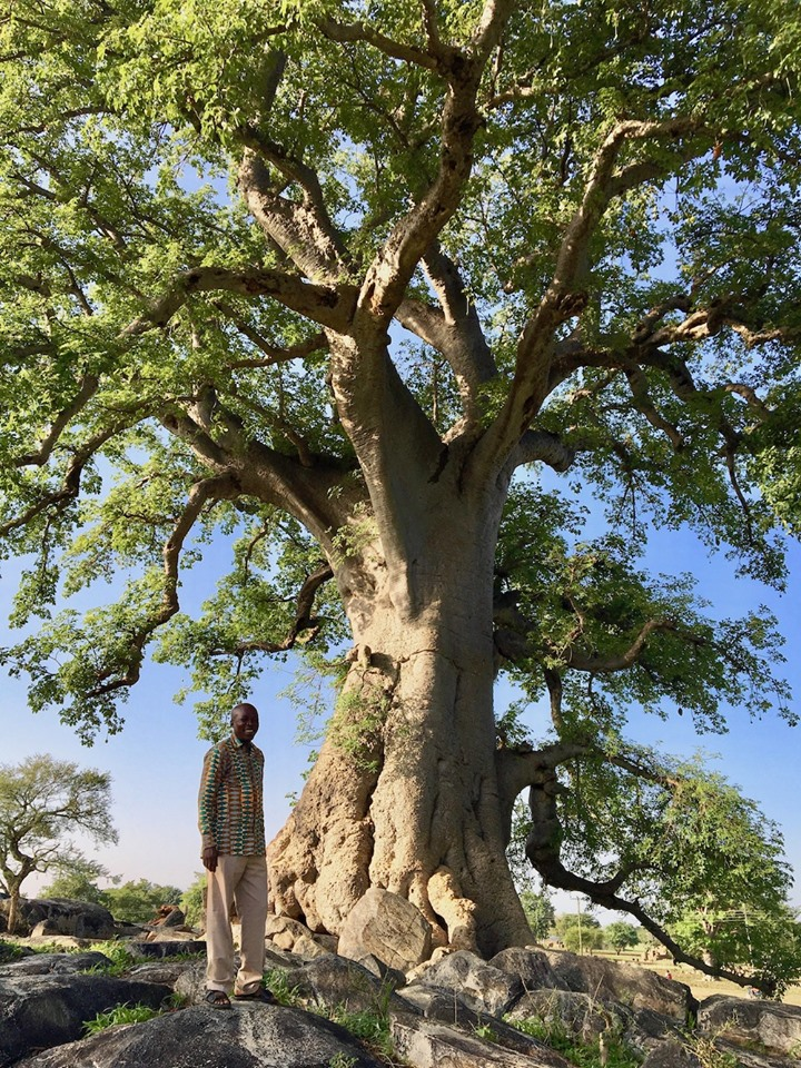 Stephen & the Baobabs