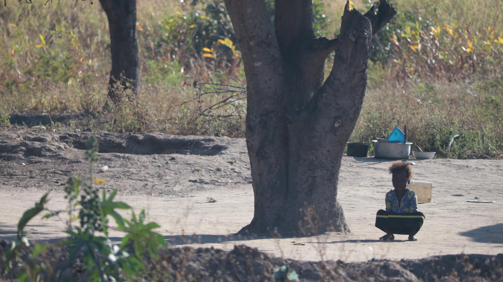 Kid under tree beside the road
