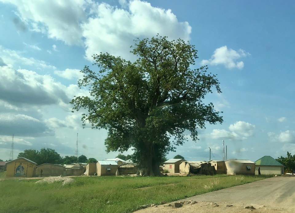 A Baobab tree (not a big one). My favorite tree on the planet. — in Ghana.
