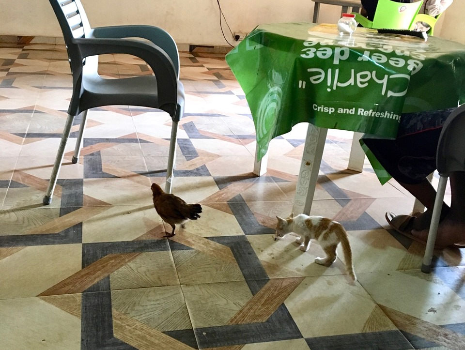 A chicken pullet and an Africat joined us for lunch.