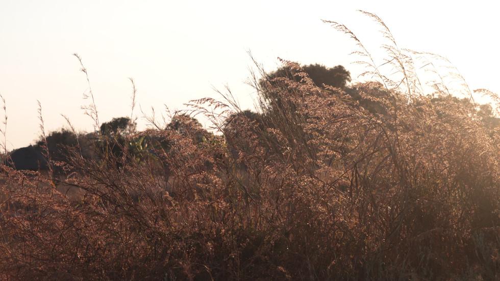 African Plains & Grasses 2