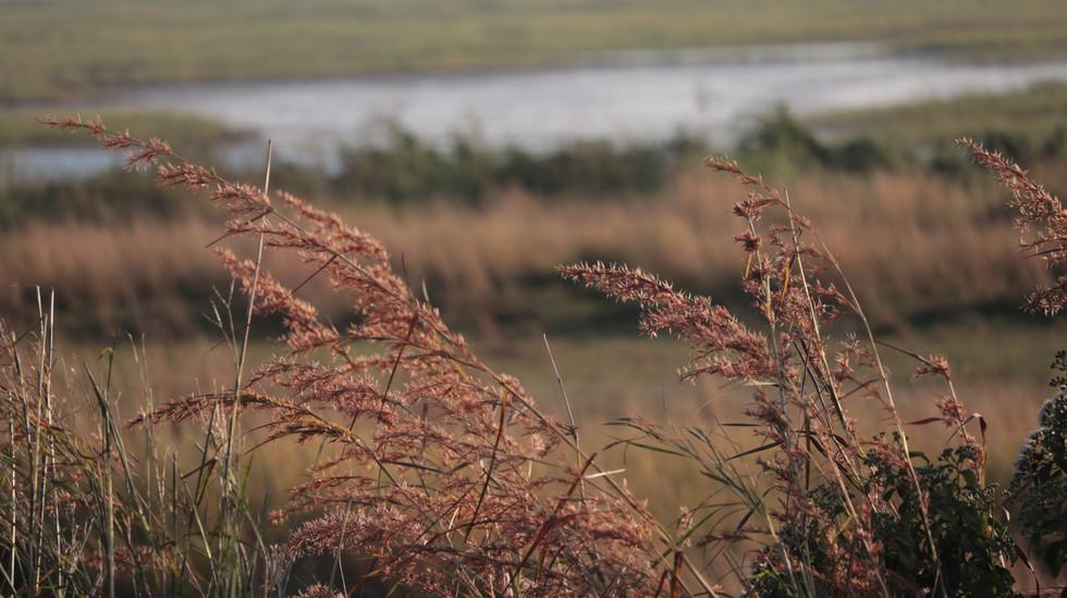 African Plains & Grasses