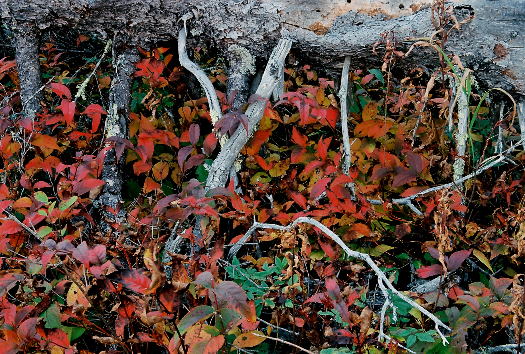 Forest Floor, Shovel Point