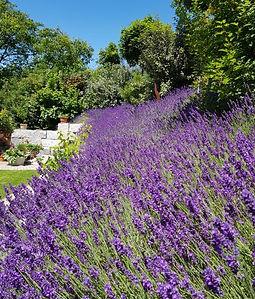 Lavendel_Snipp.JPG