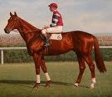 Phar Lap horse.jpg