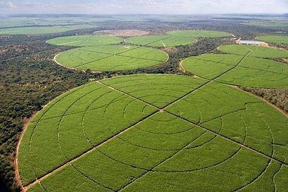 Zambia sugar