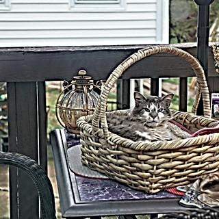Helen chilling in a basket