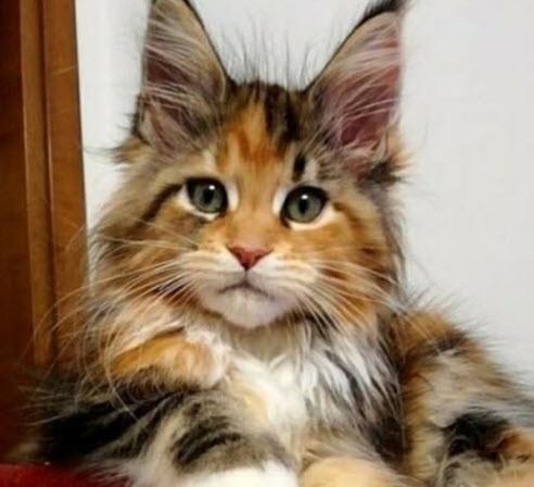 Beautiful Kitten Original