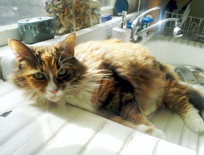 Betty's Cat Original