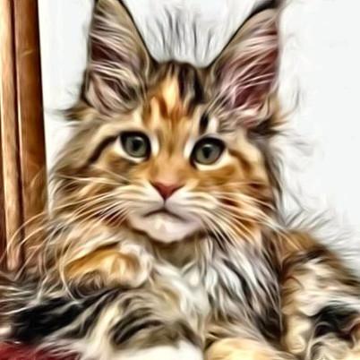 Beautiful Kitten with Effect